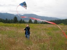having fun on the farm kites