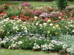 garden flowers 448 px