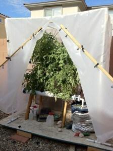 homemade hydroponics garden