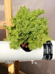 hydroponics setup