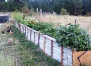 raised bed waist high