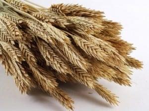 Storing Grain in Buckets