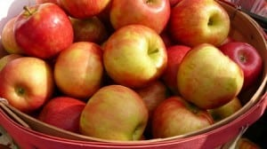 root cellar apples