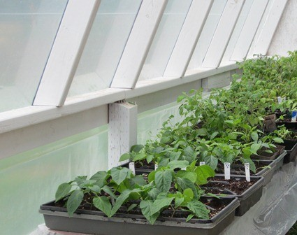 Fall and Winter Vegetable Gardens