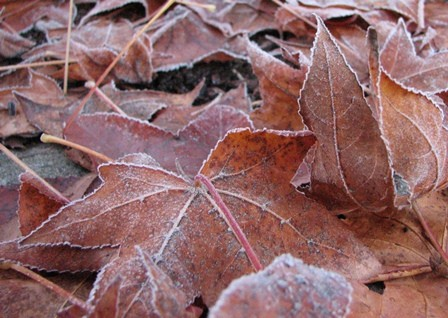 Fall frosts are just around the corner