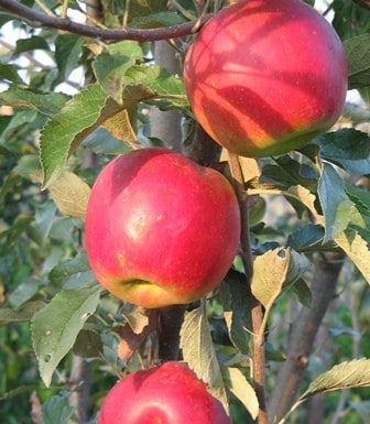 Beating Food Challenges: Growing Veggies, Herbs, and Fruit