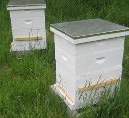 fin aid hives apex ap
