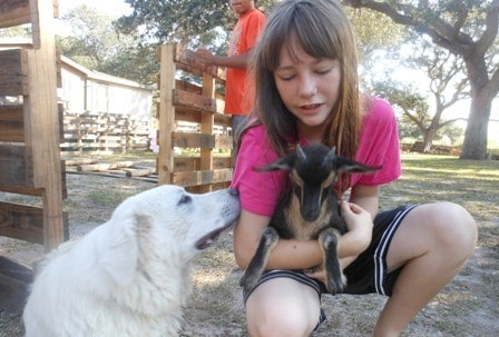 Kid holding a goat with her dog