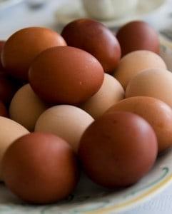 roundup eggs