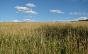 sustainable hay field - rotational grazing