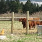 Path to Sustainability is Raising Livestock