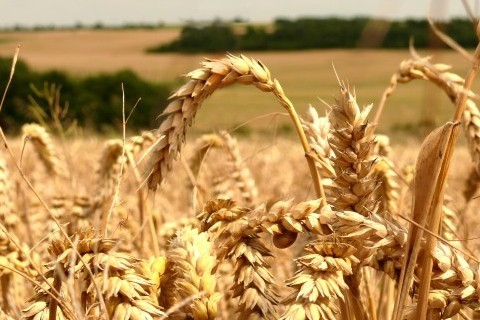 sust grain