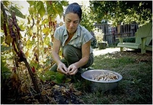 Homesteading for Beginners Making a Living Homesteading