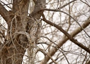 keeping owls away