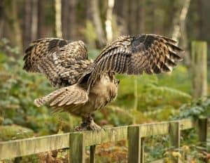 owl deterrents