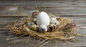 quail eggs vs chicken eggs