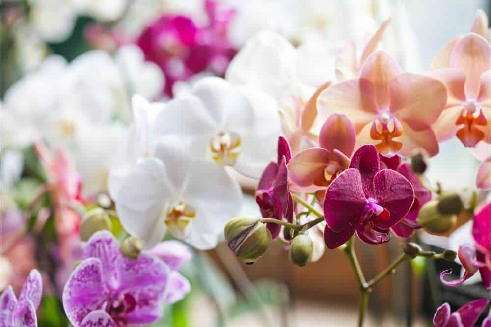 Orchid Blooming Guide Everything You Need to Know to Get Started