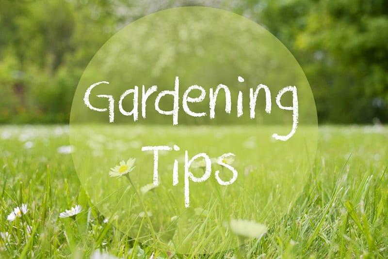 Creating a No-Till Garden