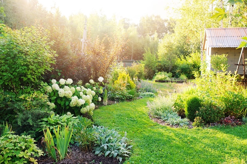 Advantages and Disadvantages of No-Till Gardening