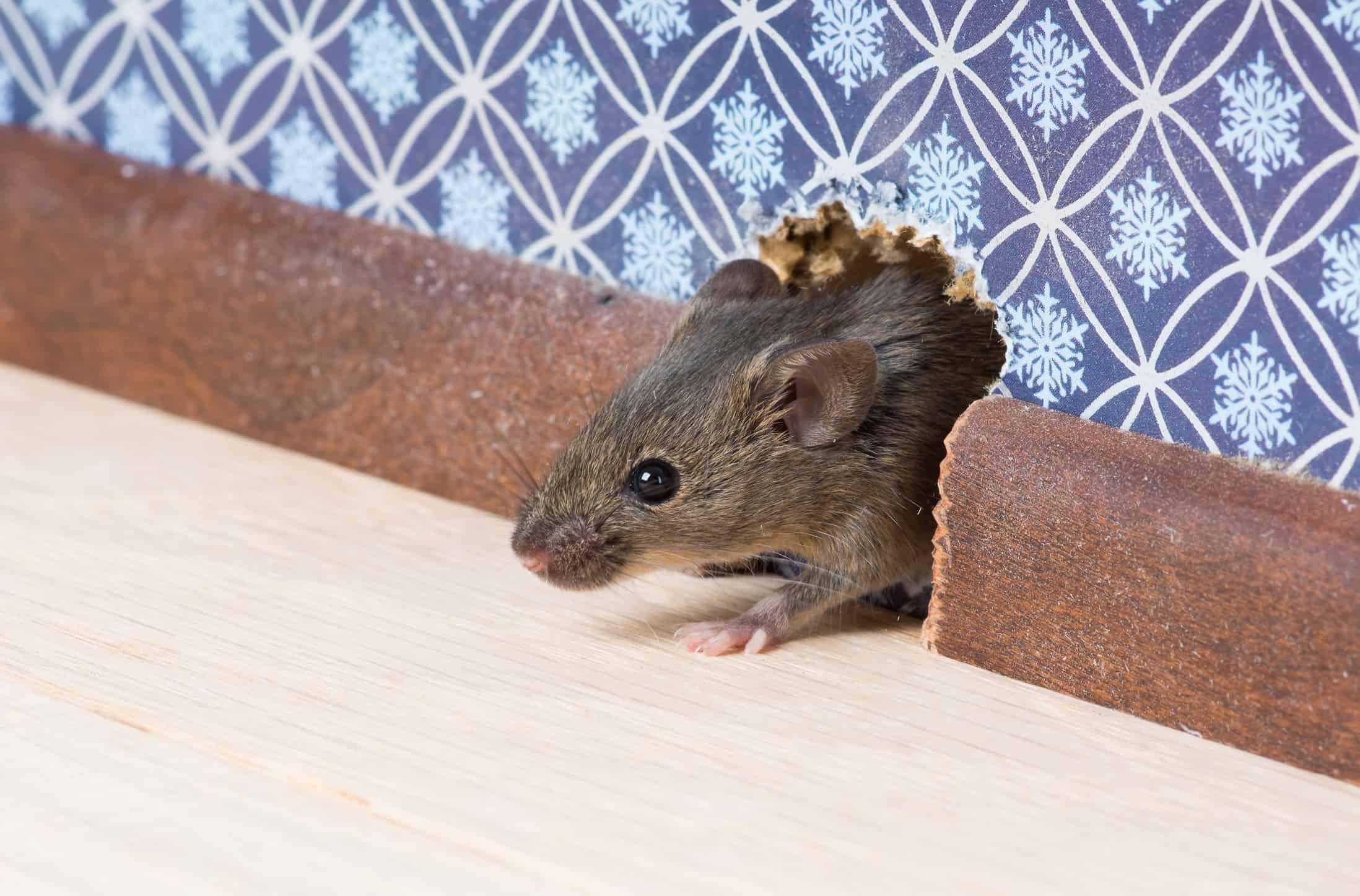 Animal Control Tips