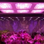 Best LED Grow Lights Review – How To Choose