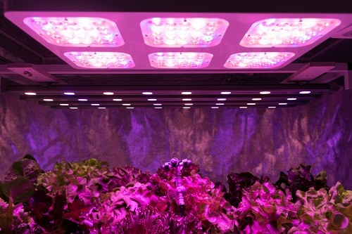Best LED Grow Lights Review - How To Choose