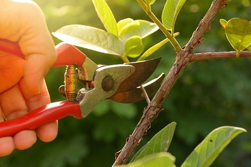 Best Pruning Shears For Roses & Orchids (With Hacks!)