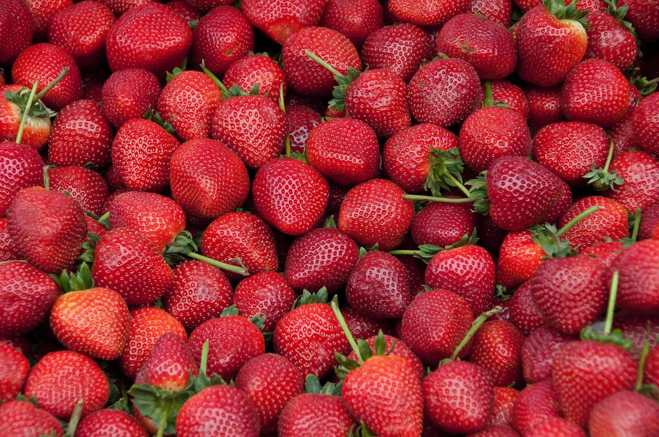 Can Chicken Eat Strawberries