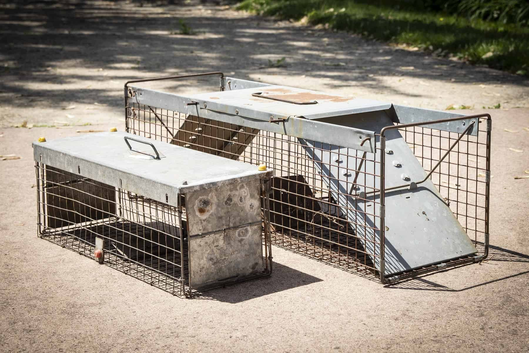 Animal traps for pest removal