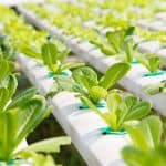 What's the Best Hydroponics Equipment for You?