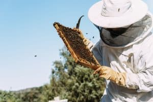 Best Beekeeping Products to Start Keeping Bees