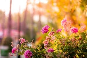 Gardening Mistakes that Could be Costly