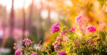 5 Gardening Mistakes that Could be Costly