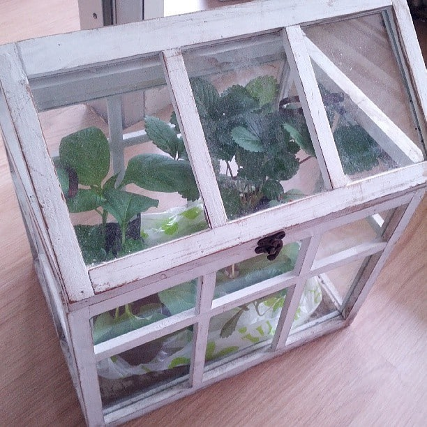 Mini outdoor Greenhouse
