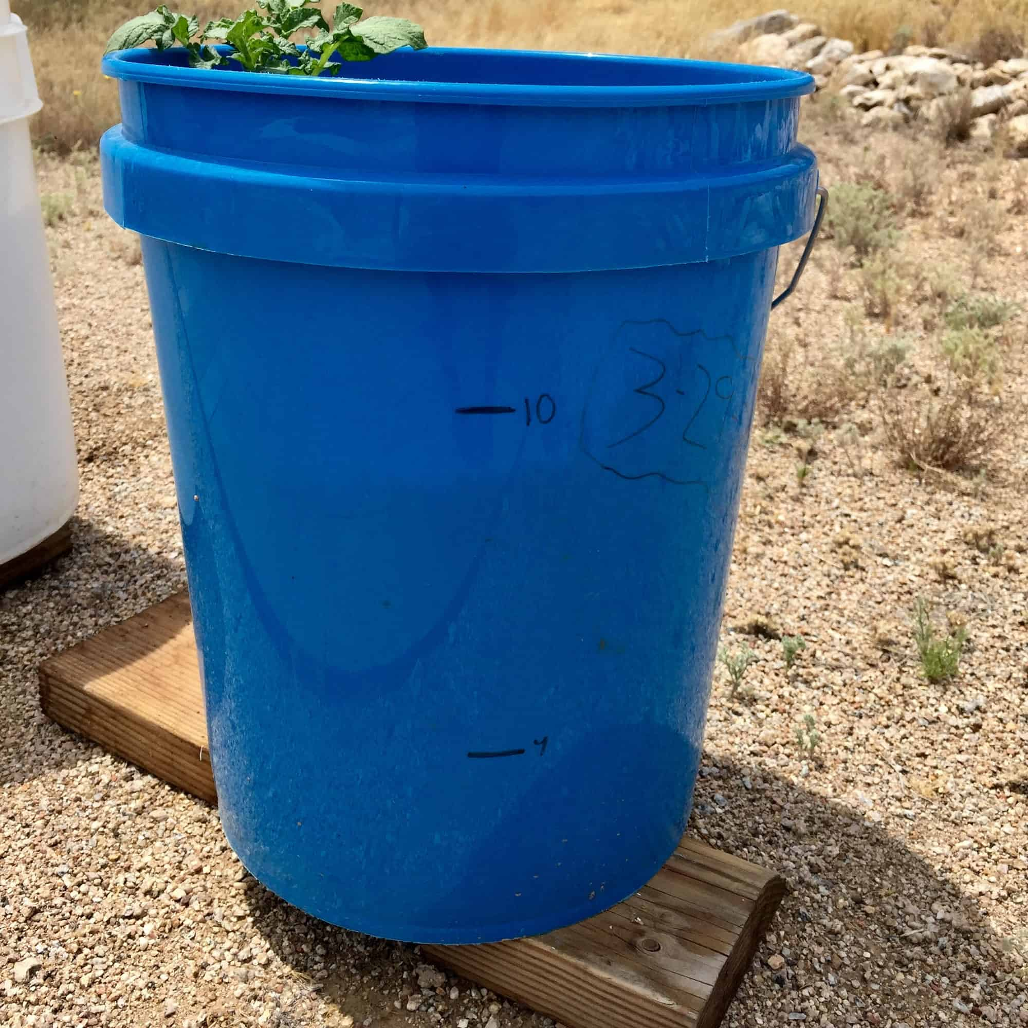Grow Potatoes in 5 Gallon Buckets