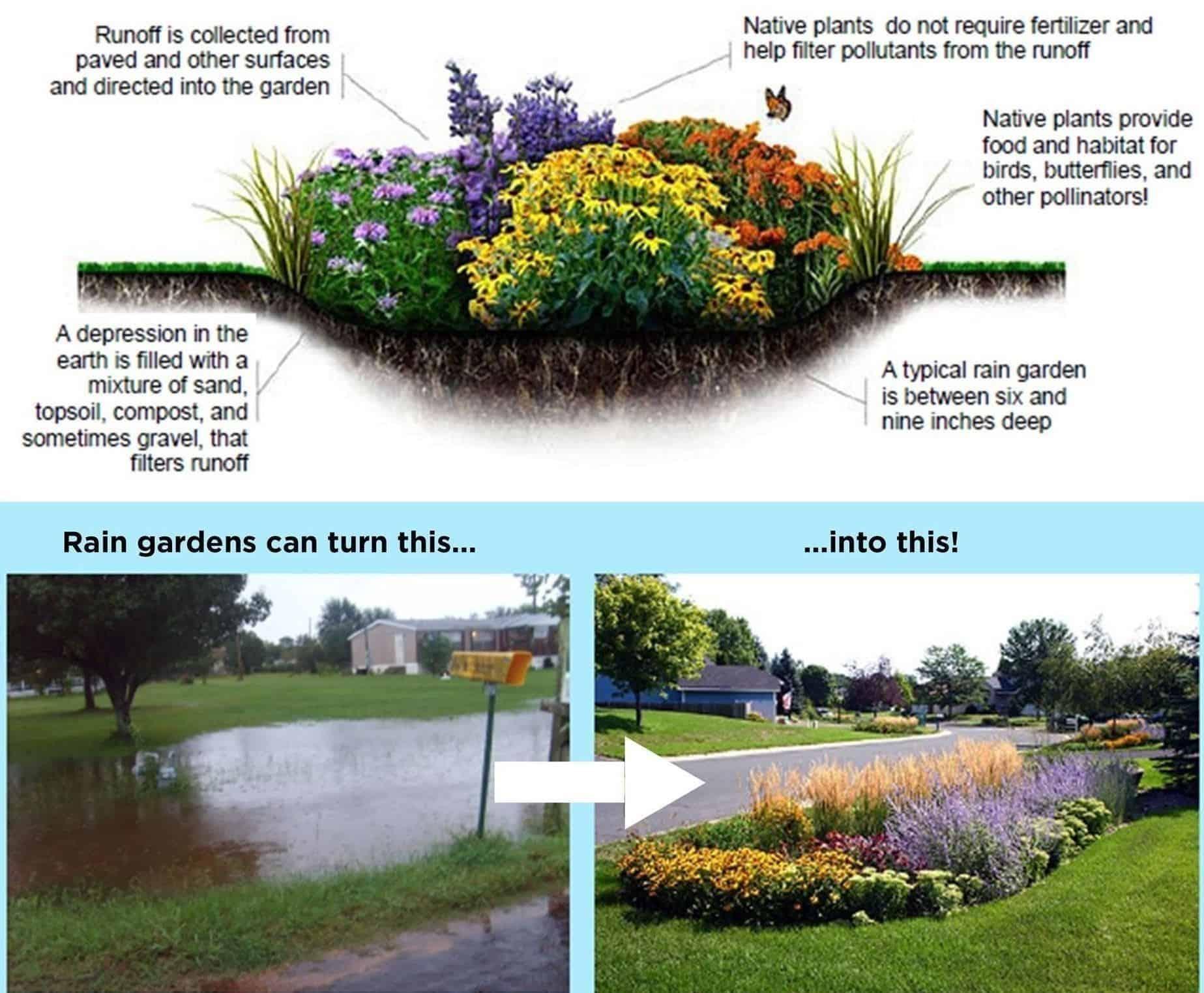 How to Build Rain Garden