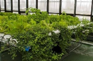 Hydroponic Greenhouse Systems