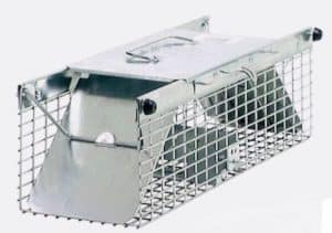 live trap for rats