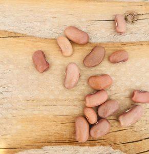 Kentucky pole bean seeds