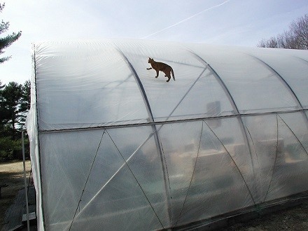 Translucent Greenhouse Cover