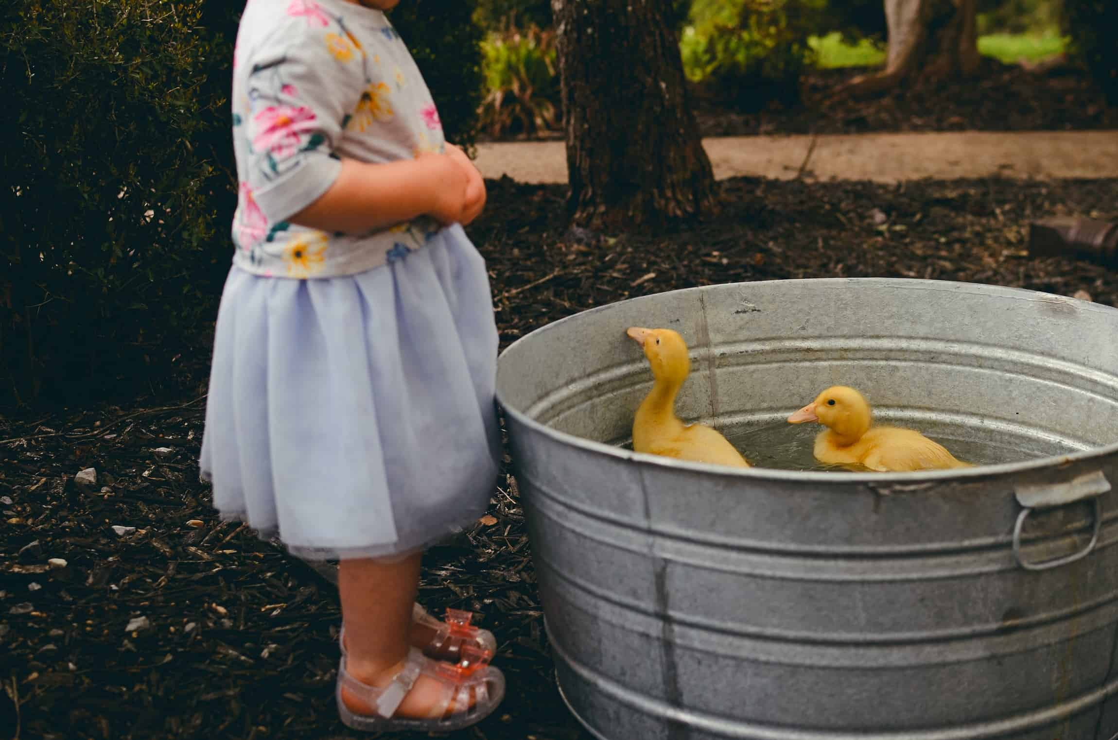 What You Need to Know raising ducks