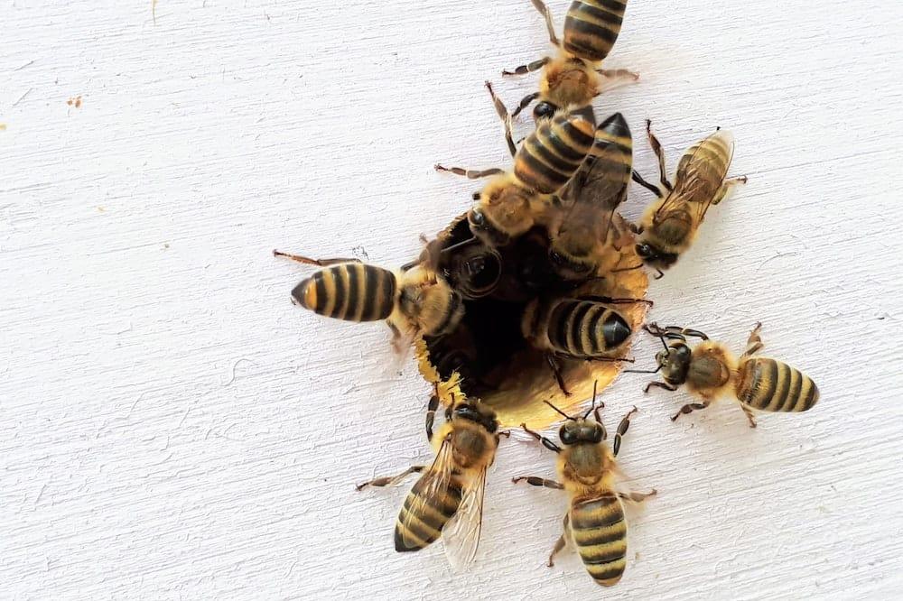 best farm animals bees