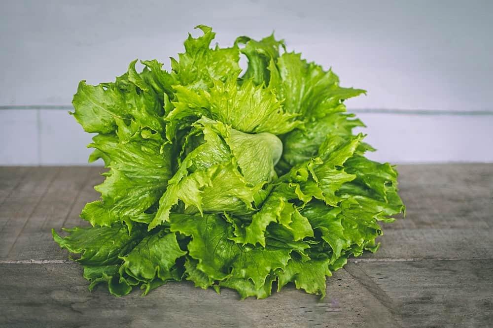 Lettuce easiest vegetables to grow