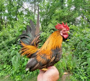 tiny rooster