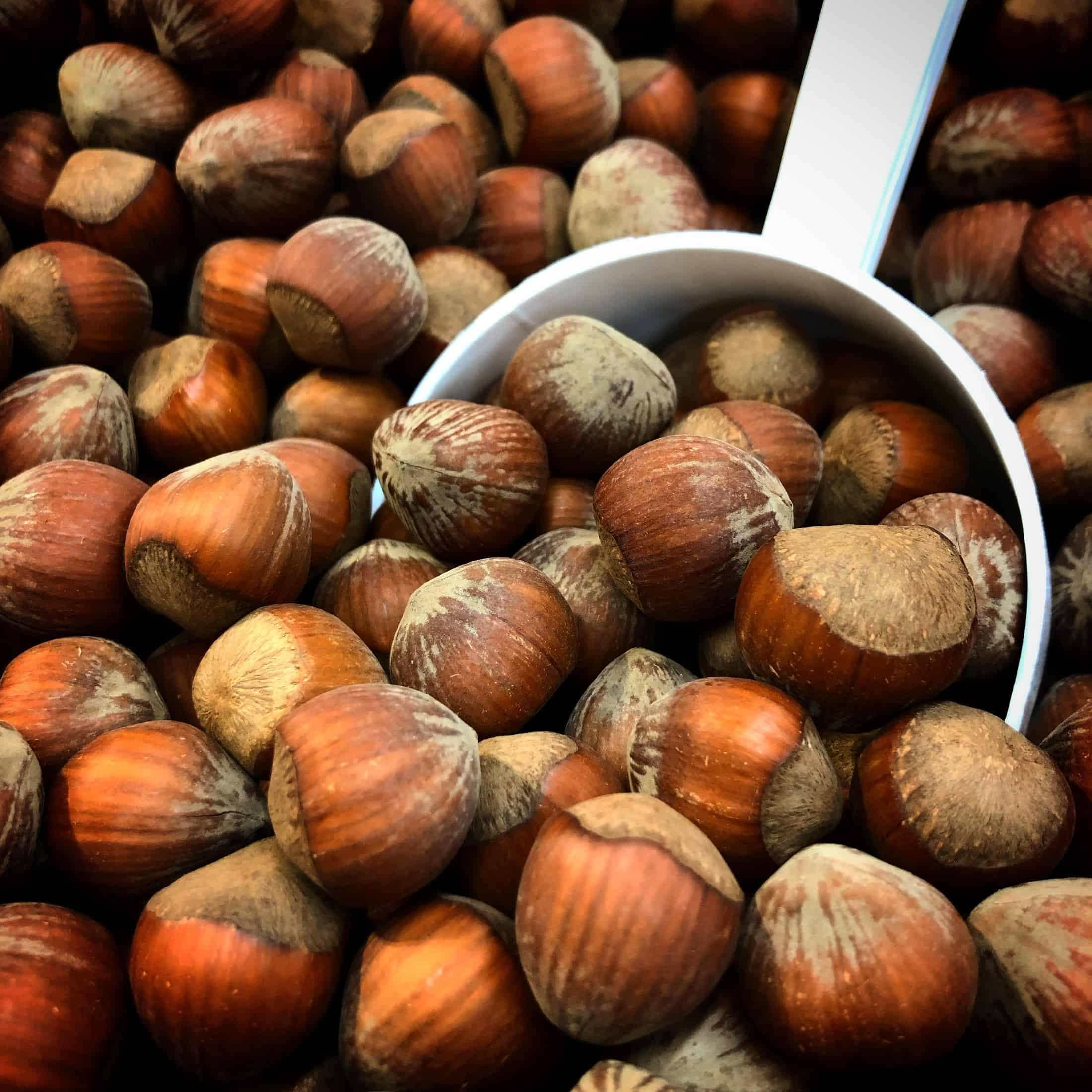 growing hazelnuts