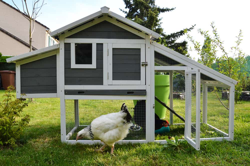 how much space do chickens need