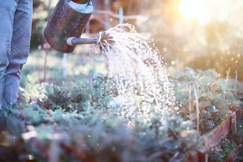 how often should i water my vegetable garden