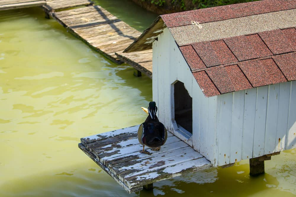 how to build a duck house