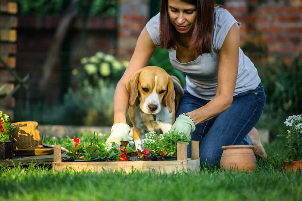 how to keep animals out of garden without fence