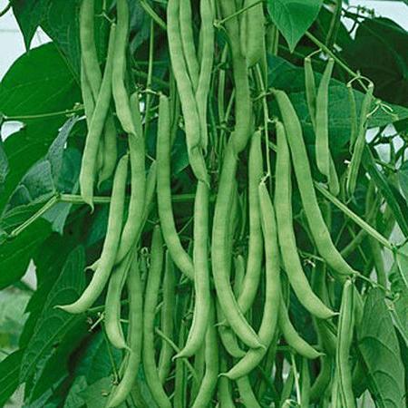 Pole beans